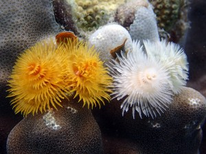 Christmas Tree Worms. These guys live inside coral and use these feather-like filters to gather microscopic food from the water.