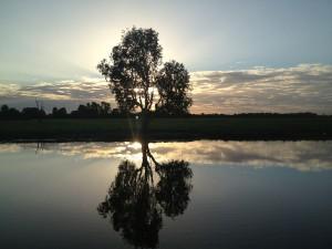 Yellow Water Sunset