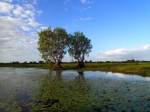 Yellow Water, a must visit location in Kakadu, just breathtaking.