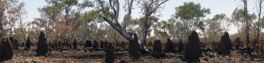 Creepy scenes over termite mounds.... dead bull nearby added the olfactory heebie-jeebies to the scene