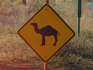 Camel's crossing... It's true, I saw some!