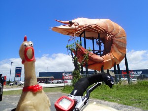 The big prawn, Ballina, NSW
